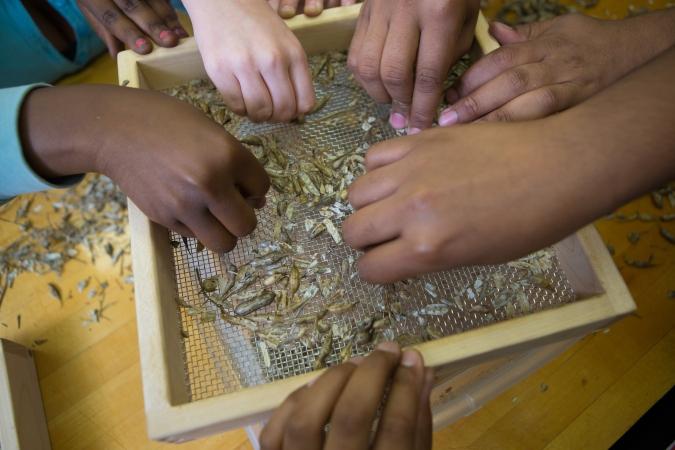 Seed sorting