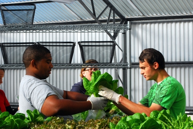 Arthur and Matt carefully bag lettuce
