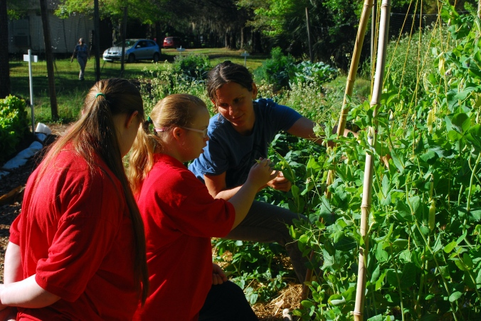 Melissa shows students how to gently harvest pea pods from the vines.