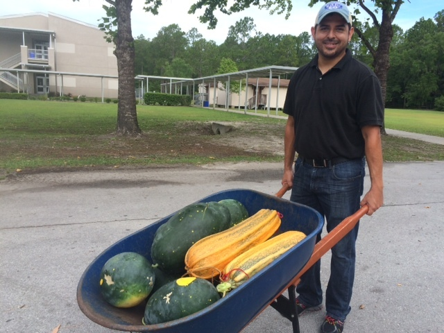 No, Daniel is not a gnome. These squash (next to the moon and stars watermelon) are HUGE - grown out for their seeds.