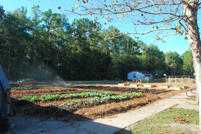 school garden demo 11.4a