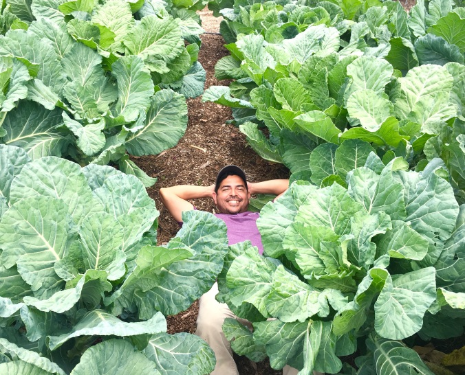daniel in the collards