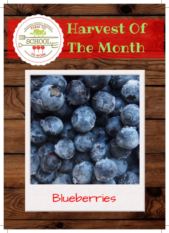 Blueberries Clay Ranch Trading Card (1)